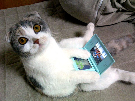 Kitties like DS Lite too!
