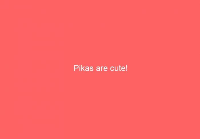 Pikas are cute!